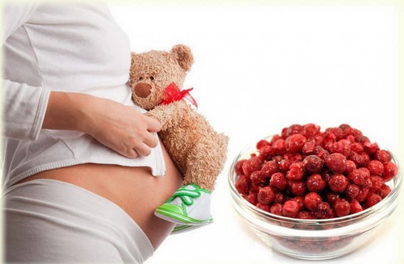 Брусника для беременных