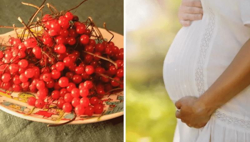 калина красная для беременных