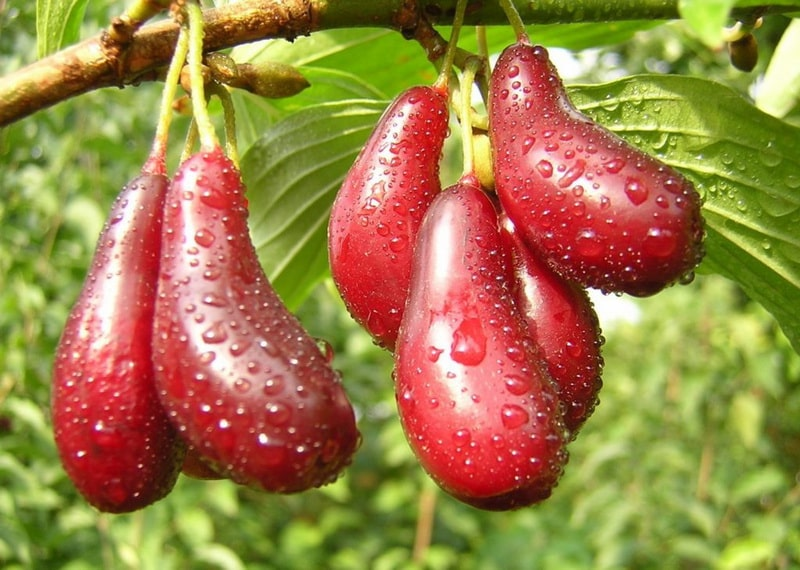 кизил ягода
