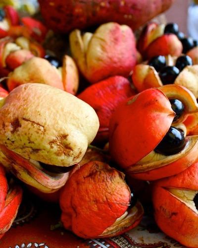 ядовитые фрукты